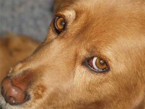 los perros sufren por la pirotecnia :(